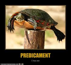 predicament2