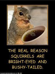 bright eyed bushy tailed