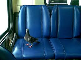 your seat on the bus